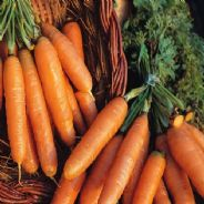 Carrot Amsterdam 2 - Adam 50 grams - Bulk Discounts available